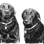 """Charlie and Alfie (Black Labradors)"" by Eris-Artwork"
