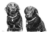 Charlie and Alfie (Black Labradors)