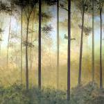 """""""Forest Harmony II"""" by HerbDickinson"""