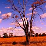 """Wild Tree"" by mommysam"