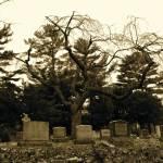 """""""Creepy Tree"""" by mommysam"""