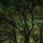 """Skeleton Tree"" by jeffVENTURES"