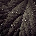 """""""a wet leaf"""" by kavolis"""