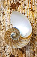 Nautilus shell on rusty table