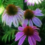 """Purple Coneflowers Abstract"" by KathieMc"