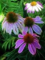 Purple Coneflowers Abstract