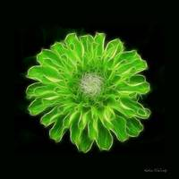 Green Zinnia Abstract