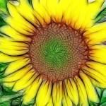 """Sunflower"" by KathieMc"