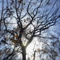 reaching for the sky by julie scholz