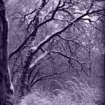 """""""Winter in Purple"""" by Groecar"""