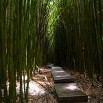 """Dark Bamboo Forest"" by RichardAustin"