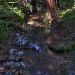 """Stream Between Trees"" by RichardAustin"