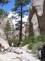 Tent Rocks with Pine Trees-Albuquerque, New Mexico