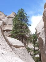 Tent Rocks-Pine Tree-Kasha-Katuwe, New Mexico