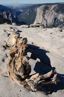 Dead Tree Above El Capitan