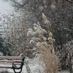 """Winter Garden    0510"" by watersedge"