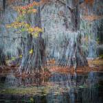 """Caddo Lake Fall"" by Inge-Johnsson"