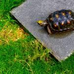 """""""Turtle Beauty"""" by sandrapenadeortiz"""