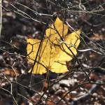 """Leaf trapped"" by unclaimedmysteries"