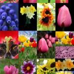 """""""flowers"""" by markashkenazi"""