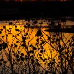"""Elkhorn River Sunset"" by AboveTheGarageStudios"