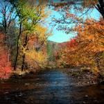 """river"" by markashkenazi"