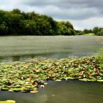 """Oxford Lake"" by TJ-Falconer"