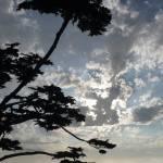 """carmel_cypress_silhouette_1"" by gbensonart"