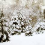 """""""Snow Pines"""" by JessicaJenney"""