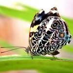 """Butterfly on a green plant"" by Auero"