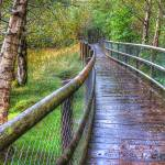 """Along the Boardwalk"" by irishphotographer"