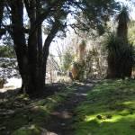 """Weindorfers Forest Walk, Tasmania, Australia 001"" by dawncloudflower"