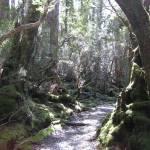 """Weindorfers Forest Walk, Tasmania, Australia 003"" by dawncloudflower"