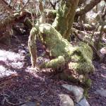 """Weindorfers Forest Walk, Tasmania, Australia 004"" by dawncloudflower"