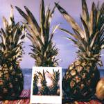 """Pineapples and Polaroid"" by joegemignani"