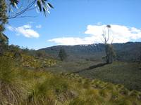 Near Crater Lake, Cradle Mountain, Tasmania 003