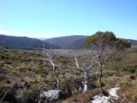 Near Crater Lake, Cradle Mountain, Tasmania 005
