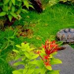"""Red Footed Tortoise Exploring Outdoor Enclosure"" by sandrapenadeortiz"