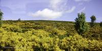 Moorland in Bloom