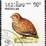 """Japanese Quail bird stamp."" by FernandoBarozza"
