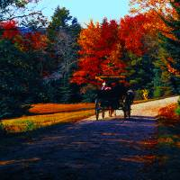 Acadia  carriage trails horse and buggy Art Prints & Posters by Tom Jelen