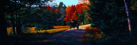 Acadia  carriage trails horse and buggy