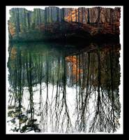 Tall Trees Reflected