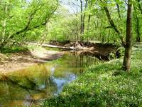 Bluebell Trail, Bull Run Park, Manassas, Virginia
