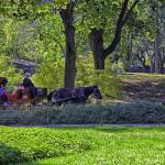 """Central Park Afternoon"" by madeline"