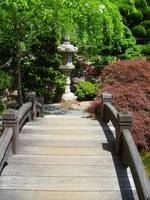 Japanese Garden Bridge with Red Maple and Lantern