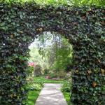 """Ivy Covered Arch & Japanese Garden"" by Marysvision"