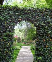 Ivy Covered Arch & Japanese Garden