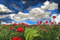 poppy field and clouds