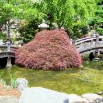"""Japanese Garden Maple and Bridges"" by Marysvision"